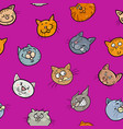 cartoon wallpaper with cats vector image