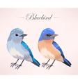 cute bluebird vector image vector image