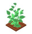 garden soybean icon isometric style vector image vector image