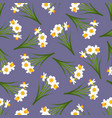white daffodil - narcissus seamless on purple vector image