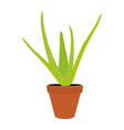 aloe vera flower vector image