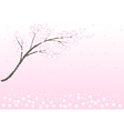 Cherry blossom in spring time background vector image vector image