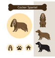 cocker spaniel dog breed infographic vector image