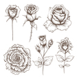 Hand drawn rose flowers set vector image vector image