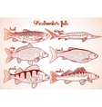 Graphic freshwater fish collection vector image vector image