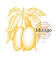 mango branch hand drawn tropic fruit engraved vector image