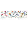 collection wild blooming meadow flowers vector image