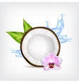 Coconut with green leaves vector image vector image