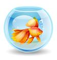 goldfish in an aquarium vector image vector image
