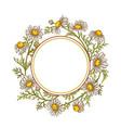 chamomile flower frame vector image vector image