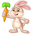 Cute bunny holding carrot isolated vector image vector image