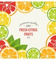 Grapefruit lime lemon and orange with mint vector image vector image