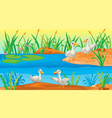 scene with ducks river vector image vector image