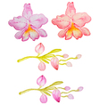 Watercolor hand drawn orchids vector image vector image