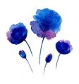Watercolor poppies vector image vector image