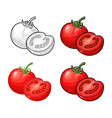whole and half tomatoes vintage engraving vector image vector image