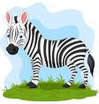 cartoon happy zebra in grass vector image vector image