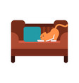 cute red cat lying on a brown sofa home pet vector image