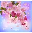 background with gentle sakura branch flowers vector image