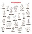 Best antispasmodic herbs collection