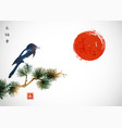 big magpie bird sitting on pine tree branch and vector image vector image