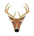 portrait deer hipster style glasses vector image vector image