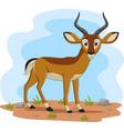 cartoon impala in field vector image vector image