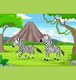 cartoon two zebras in jungle vector image vector image