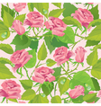 Floral seamless pattern with blooming pink roses vector image vector image