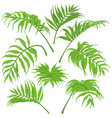 green palm leaves isolated vector image vector image
