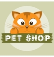 Pet shop emblem Orange cat on animal store banner vector image vector image
