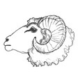 ram domestic animal vector image vector image