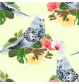 seamless texture budgerigar home pet blue pet vector image vector image