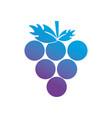 contour delicious grape organic fruit vector image vector image
