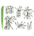 set isolated sketches bamboo stalk vector image