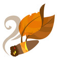 tobacco leaves and cigar color on the theme of vector image