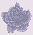 violet rose isolated flower isolated violet rose vector image