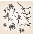 Hand drawn sketches of plants vector image