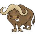 african buffalo vector image vector image