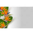 bird paradise flower 3d transparent background vector image