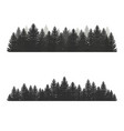 coniferous pine forest silhouettes evergreen vector image