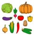 Farm vegetables color retro sketches vector image vector image