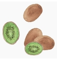 Hand-drawn kiwi Real watercolor drawing vector image