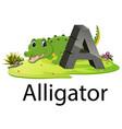 zoo animal alphabet a for alligator vector image