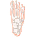 Bone x-ray for gout toe vector image vector image