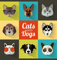 dogs and cats portraits with flat design vector image