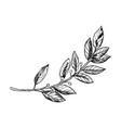 laurel branch engraving vector image vector image