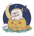 pug out from pumpkin skull night witch vector image