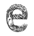 ancient antique capital letter e with an ornament vector image