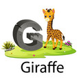 cute zoo animal alphabet g for giraffe vector image vector image